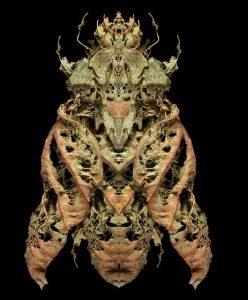 Anthropocene musca sp
